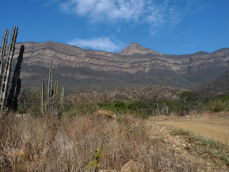"Named for the prominent peak above it, Chaparri Ecological Reserve is a private, community-based reserve, conserving some 90,000 acres of deciduous forest and scrub--and home to numerous Tumbesian specialties. <div id=""caption_tourlink"" align=""right""><br>[photo © Rose Ann Rowlett]</div>"