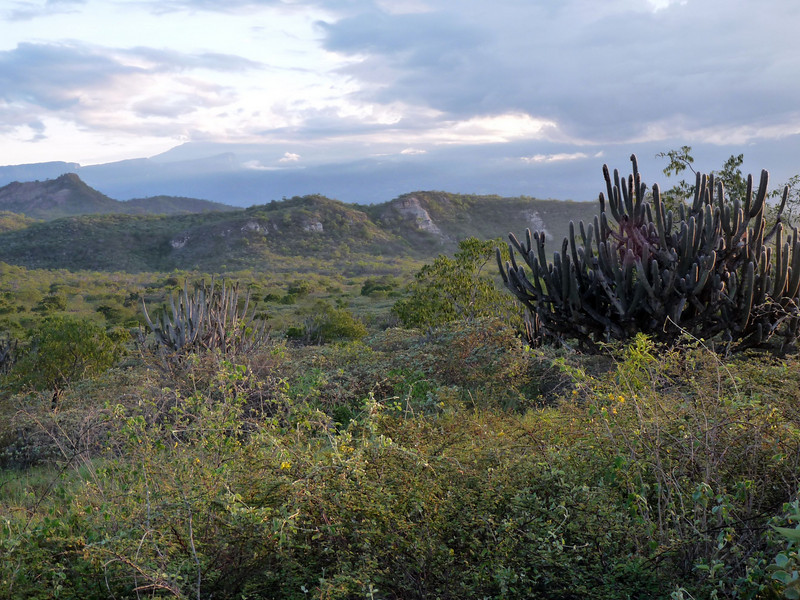 """Then it's on over Porculla Pass and into the arid basin of the Rio Maranon, for our first time. Having created a vast low desert between high cordilleras covered with humid forest, the Rio Maranon has been considered the greatest single biogeographic barrier in South America.  <div id=""""caption_tourlink"""" align=""""right""""><br>[photo © Rose Ann Rowlett]</div>"""
