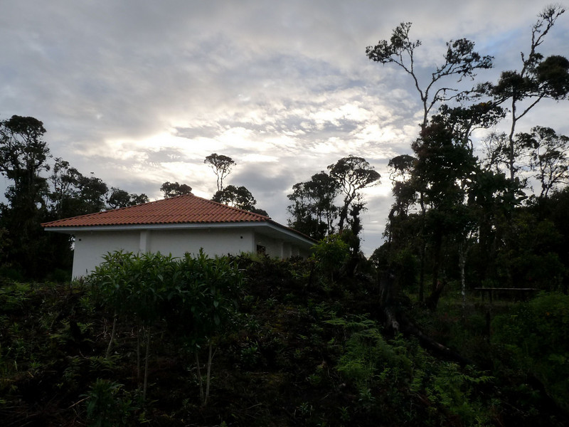 """If we're lucky--and if the moon shines through the clouds--we could enjoy some terrific night-birding at Owlet Lodge, seeing Andean Potoo, White-throated Screech-Owl, or even the near-mythical Long-whiskered Owlet.  It should be a stay to remember.  <div id=""""caption_tourlink"""" align=""""right""""><br>[photo © Rose Ann Rowlett]</div>"""