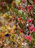 """Marvelous Spatuletail male, Florida de Pomacochas <div id=""""caption_tourlink"""" align=""""right""""> [photo © participant Dale Zimmerman]</div>"""