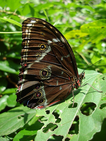 "Inside the butterfly garden at Pto Maldonado<div id=""caption_tourlink"" align=""right""><br>[photo © Rose Ann Rowlett]</div>"