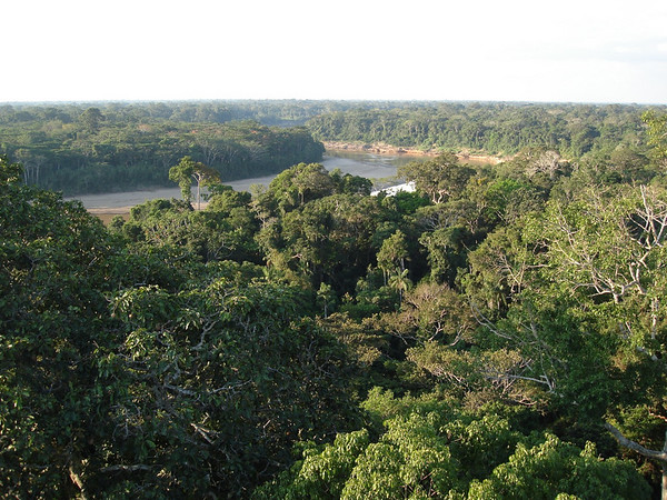 "View of the Rio Tambopata from the canopy tower at Posada Amazonas<div id=""caption_tourlink"" align=""right""><br>[photo © Rose Ann Rowlett]</div>"