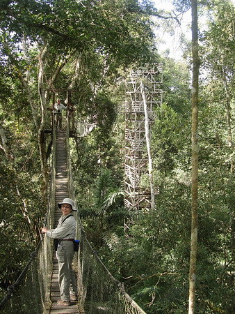 "The canopy walkway, approaching one of the canopy platforms, at Reserva Amazonica<div id=""caption_tourlink"" align=""right""><br>[photo © Rose Ann Rowlett]</div> (Rita Dedeker & Barney Scollan)"
