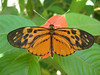 "Inside the butterfly garden at Pto Maldonado<div id=""caption_tourlink"" align=""right""><br>[photo © Rose Ann Rowlett]</div>"