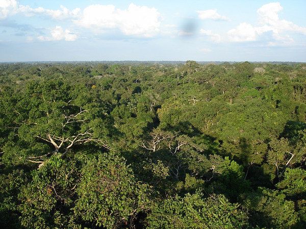 "View from the canopy tower at Posada Amazonas<div id=""caption_tourlink"" align=""right""><br>[photo © Rose Ann Rowlett]</div>"