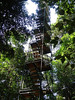 "The canopy tower at Posada Amazonas<div id=""caption_tourlink"" align=""right""><br>[photo © Rose Ann Rowlett]</div>"