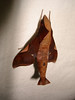 "Sphinx moth on my curtain at TRC<div id=""caption_tourlink"" align=""right""><br>[photo © Rose Ann Rowlett]</div>"
