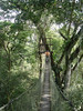 "Jessica on the canopy walkway at Reserva Amazonica<div id=""caption_tourlink"" align=""right""><br>[photo © Rose Ann Rowlett]</div>"