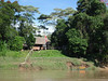 """The check-in station at the Tambopata Reserve, where we take a stretch break coming and going to TRC.  On this trip, there was a Jabiru sailing high overhead in the blue sky as we were leaving. <div id=""""caption_tourlink"""" align=""""right""""> [photo © guide Rose Ann Rowlett]</div>"""