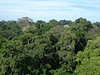 """View from the canopy tower at Posada Amazonas.  A flock of Curl-crested Aracaris should pop up at any moment. <div id=""""caption_tourlink"""" align=""""right""""> [photo © guide Rose Ann Rowlett]</div>"""