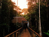"""We gather for breakfast early, walking from our bungalows along this boardwalk to the dining room, at Posada Amazonas. <div id=""""caption_tourlink"""" align=""""right""""> [photo © guide Rose Ann Rowlett]</div>"""