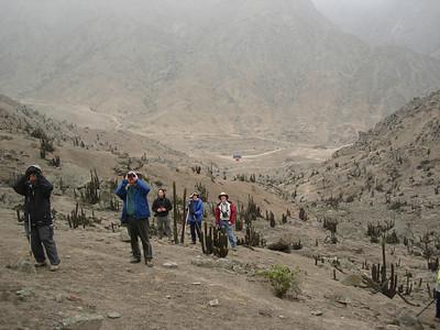 Peruvian Rainforests of the Tambopata