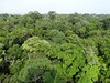 Beautiful rainforest canopy visible from the MUSA tower near Manaus. Photo by guide Rose Ann Rowlett.