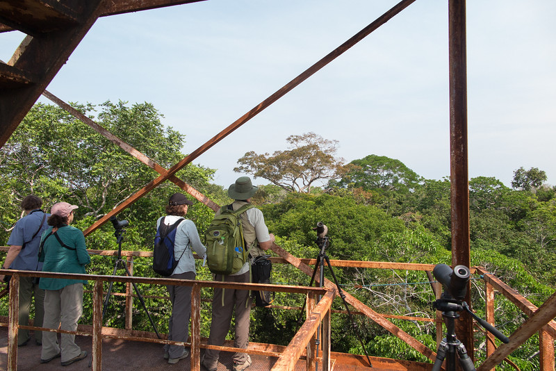 Atop the INPA tower near Manaus. Photo by guide Richard Webster.