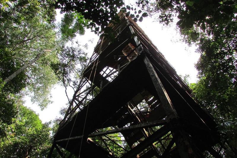 The MUSA tower at Reserva Ducke near Manaus. Photo by participant Dan Peshka.