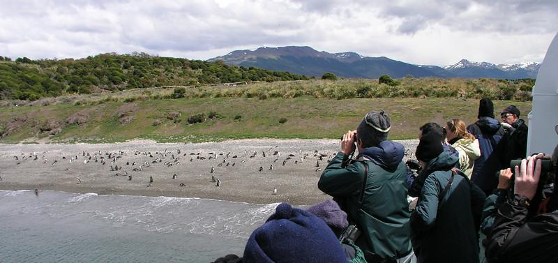 """Beagle Channel birding. <div id=""""caption_tourlink"""" align=""""right""""> [photo © guide Dave Stejskal]</div>"""