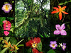 "Within walking distance of our lodgings is an epiphyte-laden forest with a wonderful diversity of plants, many of them strikingly beautiful.  <br><div id=""caption_tourlink"" align=""right""> [photos © participant Diana Bradshaw]</div>"
