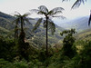 """The view southeast from Tapichalaca shows the road winding down toward Valladolid and the Peruvian border. Most of the forest visible is a part of the 9400-acre reserve.  <br><div id=""""caption_tourlink"""" align=""""right""""> [photo © guide Rose Ann Rowlett]</div>"""