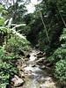"Serra dos Tucanos stream<div id=""caption_tourlink"" align=""right""><br>[photo © guide Richard Webster]</div>"