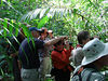 """Birding inside the forest at Meerzorg, near the capital city of Paramaribo <div id=""""caption_tourlink"""" align=""""right"""">[photo © guide Bret Whitney]</div>"""