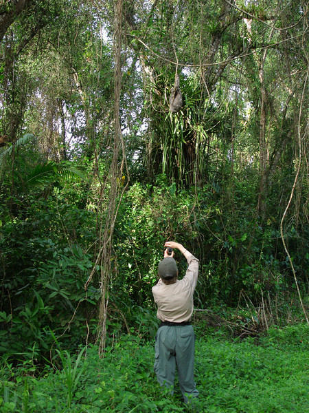 "Photographing a sloth <div id=""caption_tourlink"" align=""right"">[photo © guide Bret Whitney]</div>"