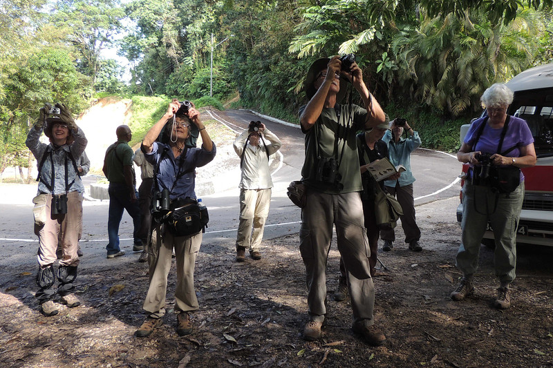 The nature paparazzi gets their shots of a calling (and eminently cooperative) White-tailed Trogon. (Photo by guide Megan Crewe)