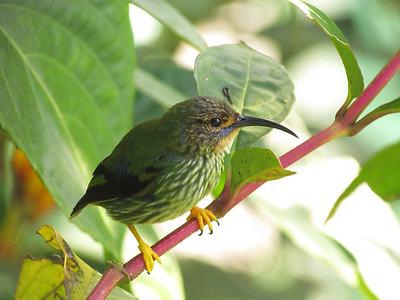 Trinidad and Tobago December 2012