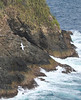A Red-billed Tropicbird against the shore on Little Tobago (Photo by participant Barb Wanless)