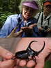 "And, of course, birds are not the only critters of interest we'll find inside the forest. A researcher based at Wildsumaco identified this big rhinoceros beetle as Anima pan (and chuckled). <br><div id=""caption_tourlink"" align=""right""> [photos © guide Rose Ann Rowlett]</div>"