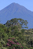 "The centerpiece of our tour is Wildsumaco, on an outlying ridge of the eastern Andes, near the base of Volcán Sumaco, itself an outlying volcano east of the main cordillera.   <br><div id=""caption_tourlink"" align=""right""> [photo © guide Richard Webster]</div>"