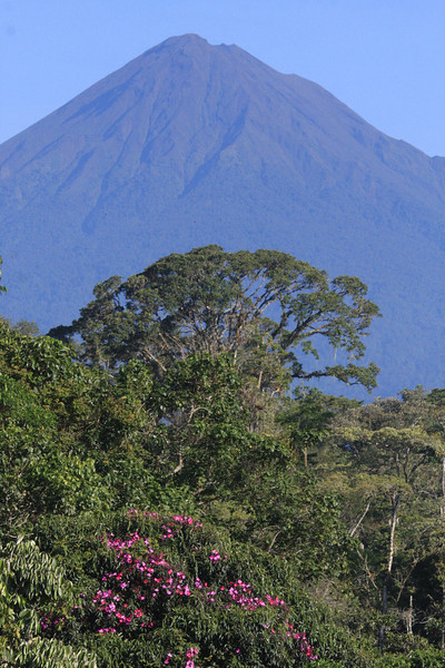"""The centerpiece of our tour is Wildsumaco, on an outlying ridge of the eastern Andes, near the base of Volcán Sumaco, itself an outlying volcano east of the main cordillera.   <br><div id=""""caption_tourlink"""" align=""""right""""> [photo © guide Richard Webster]</div>"""