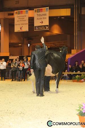 Holstein Intermediate
