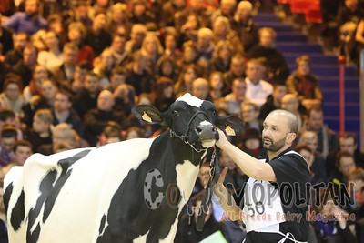 SIA Paris 2016 Junior Holstein