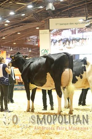 SIA Paris 2016 Senior Holstein Cows