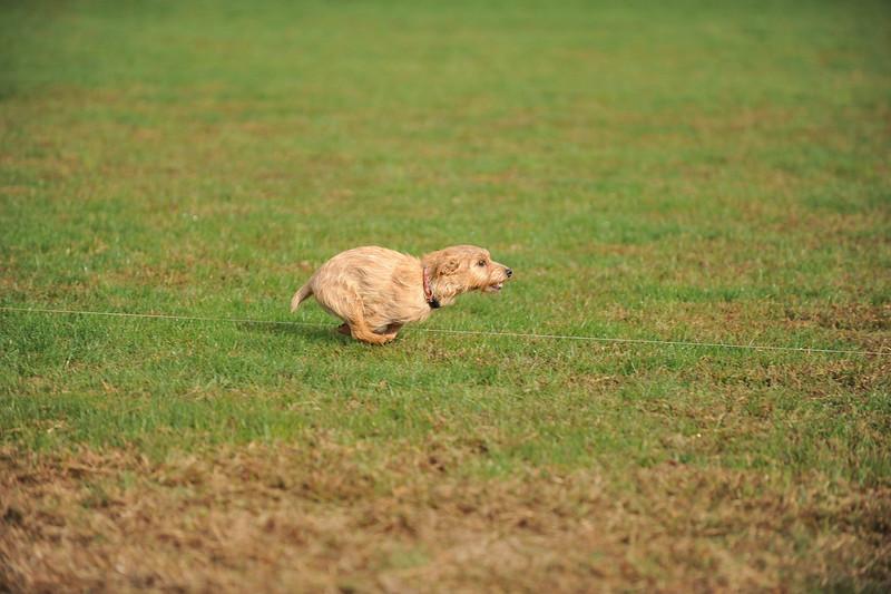 First CAT 10-19-13-436