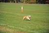 First CAT 10-19-13-414