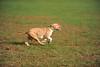 First CAT 10-19-13-422