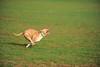 First CAT 10-19-13-419