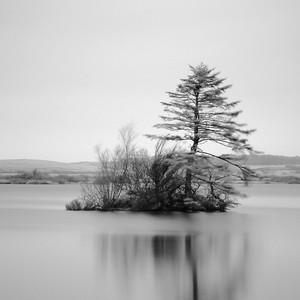 Island with Fir, Study 2, Mochrum Loch, Scotland. 2015