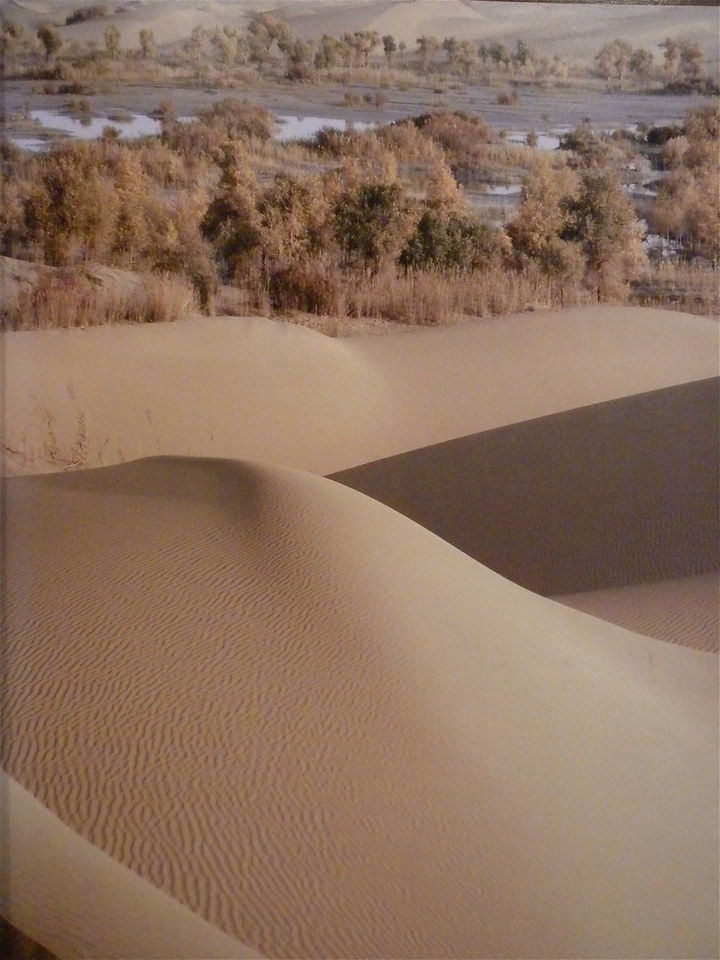 Northern Desert where the Cemetery was found