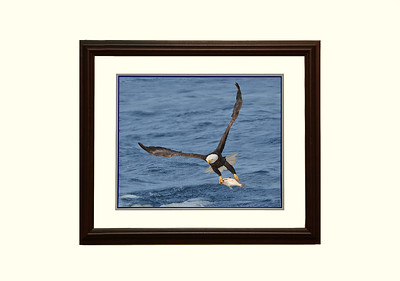 Eagle print # 5750 Available as ( 16X20 ) and ( 11X14 ) prints. Frame not included. Order prints in the Eagle Gallery