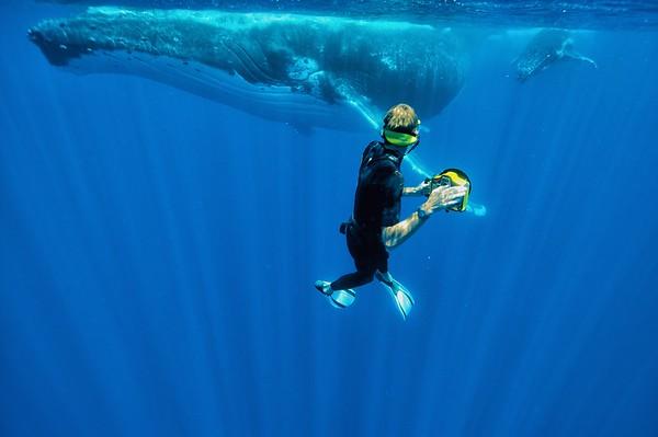 Whales around Moorea