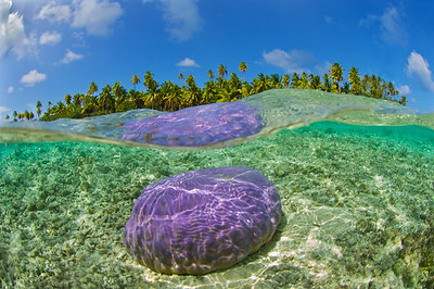 Tikehau Pink Coral Head