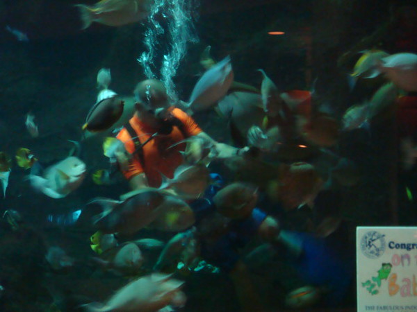 Another night at Oceanarium for Seafood buffet.. it was feed time in the tank..