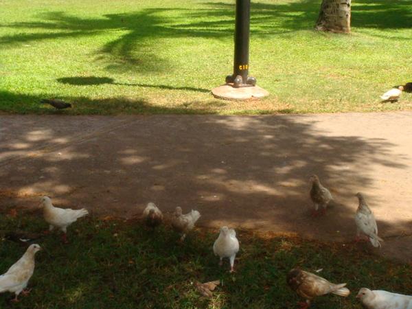 birds feeding time at Hale Koa park