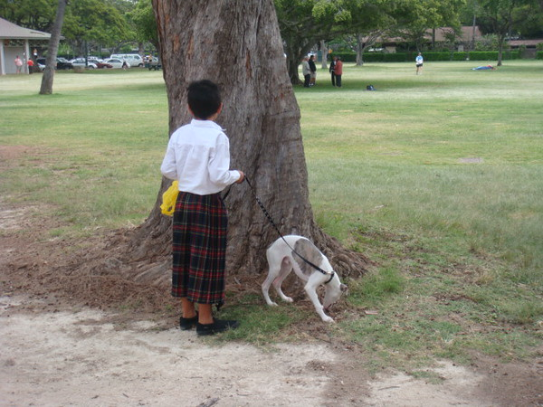 little boy with Scotich costume.. walking his dog at Kapiolani Park.