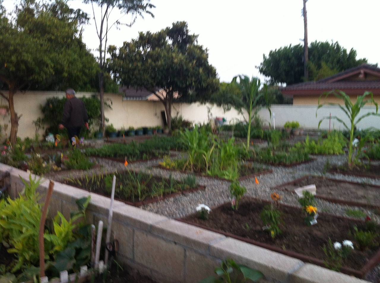 veggies garden at Sr Citizen's home..