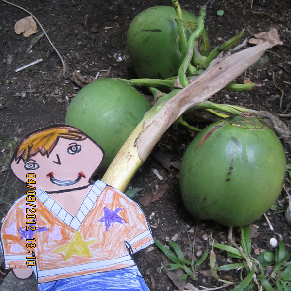 guess what I got?  3 coconuts....