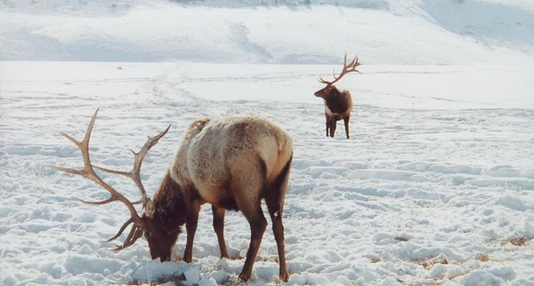 Jackson Hole-National Elk Refuge