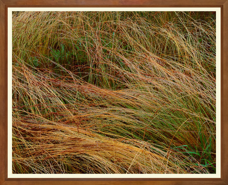 Grasses with Dew